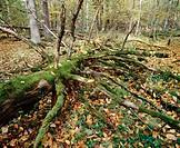 Bialowieza National Park. Poland