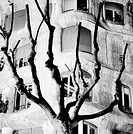 Tree branches in front of Milà House (aka 'La Pedrera', 1906-1912) facade by Antoni Gaudí. Barcelona. Spain