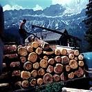 hist. Landwirtschaft, Forstwirtschaft / Holz, Holztransport am Rosengarten, Südtirol 1966  gebirge alpen im hgr.,