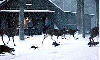 Film, ´Dreamcatcher´, USA / Kanada 2003, Nach Roman von Stephen King, Regie Lawrence Kasdan, Szene mit Jason Lee & Damian Lewis  horrorfilm horror vor...