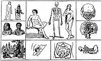 Comenius, Johann Amos, 1592 - 1670 Theologe, Originalgroße Wiedergabe nach den mehrfarbigen Bildern des Werkes ´Orbis pictus´, (Der Mensch),