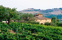 Vineyards. Chianti region. Tuscany, Italy