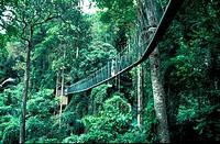Canopy walkway, FRIM, Malaysia