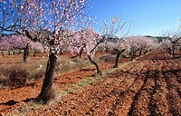 Plowed land and Almond trees in Sierra de Irta Natural Park. Castellon province, Spain