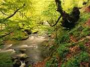 Nalon River. Valle de Caso. Asturias. Spain
