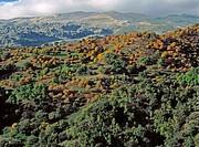 Cartajima, Serranía de Ronda. Málaga province, Spain