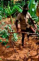 Madagascan farmer, Mahajamba River, Madagascar