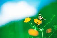 Nature,