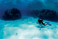 Coral reef and diver (thumbnail)