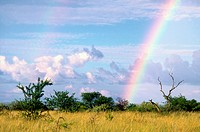 Bushveld, Rainbow, South Africa