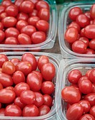 Grape tomatos packaged and sold at the farmers market in Union Square. New York City, USA