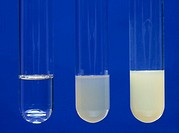 Test for halogenated compounds with silver nitrate solution. The three test tubes show the result of adding silver nitrate solution to (left to right)...
