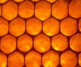 Honeycomb. View of a honey-containing honeycomb of the honey bee, Apis mellifera. Honeycomb consists of rigid hexagonal cells made largely from wax se...