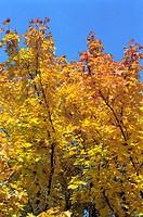 Treetop in autumn