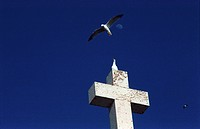 Seagull on Cross of Cabo Da Roca
