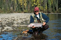 Fly fisherman holding a wild steelhead. Babine river. British Columbia. Canada