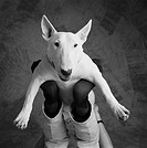 person with Bull Terrier
