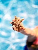 holding starfish