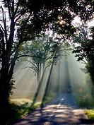 Sun fingers: the summer sun reaches down for a Pennsylvania road, USA