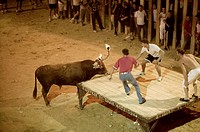'Toro embolado' (bull with fire in its horns) during traditional festival. Sollana. Valencia province, Spain