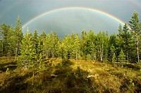Rainbow over Fulufjället National Park. Sweden