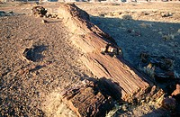 Large section of petrified trees. Petrified Forest NP. Arizona. USA
