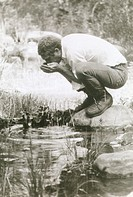 Actor Steve McQueen drinking from a pond