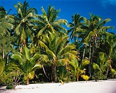Aitutaki. Cook Islands
