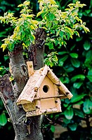 Bird house, Netherlands