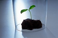earth, seedling, protection