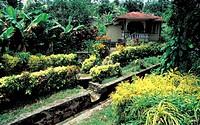 caribbean, antille, trinidad island