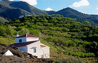 Cottage and almond grove, Axarquía. Málaga province, Spain