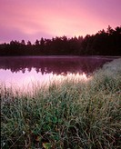Dawn and marshlands at small lake in pine forest Hallandsasen Ridge. Skane. Sweden