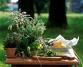 Fresh culinary herbs on table in open air