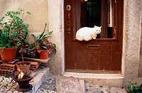 Cat on door, Chiado Alto. Lisbon. Portugal