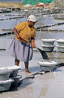 Women collecting salt. West coast. Mauritius