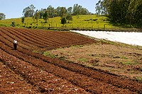 People, man, plantations, agriculture, Brazil (thumbnail)