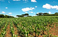 Plantations, corn, agriculture, Brazil