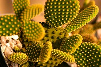 Flowers, cactus, nature (thumbnail)