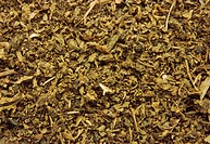 Crushed patchouli (Pogostemon cablin) leaves, used medicinally by some to treat dysentery, diarrhea, colds, vomiting, and nausea. Its strong sweet fra...