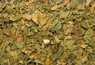 Dried ginkgo (Ginkgo biloba) leaves, used medicinally for circulatory and asthmatic conditions. Extract from the leaves promotes vasodilation and enha...