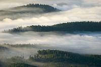 Forest in fog, landscape. Alingsas, Sweden