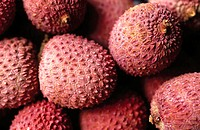 Lychee nut (Litchi chinensis). South China