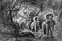 Elephant transport. Engraving from le tour du monde