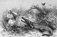 Crocodile attack, Somalia. Engraving from 'Le tour du monde'