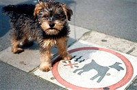 Terrier standing on information sign