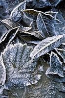 val de gru:frost on leaves, gazzaniga, italy