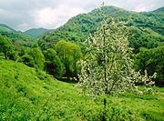 Spring. Páramo river. Teverga. Asturias. Spain.