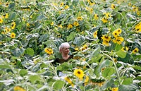 girl in a Sunflower field