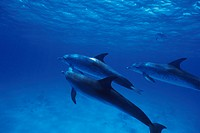 dolphin,animal,sea